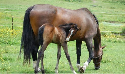horse health insurance massachusetts